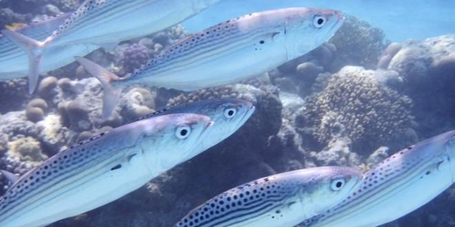 Natječaj za dodjelu potpore u okviru mjere IV.4. »Prerada proizvoda ribarstva i akvakulture«