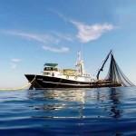 flota-marlin (1)