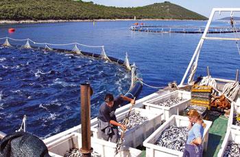 Javni poziv za podnošenje Zahtjeva za dodjelu sredstava potpora iz područja ribarstva i marikulture za 2017. godinu