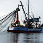 block seine fishing WDFW