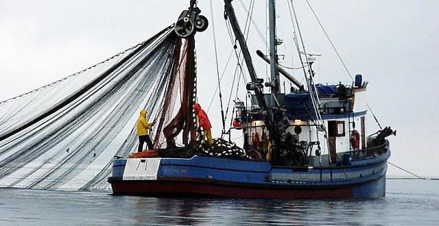 "Objavljen ""Pravilnik o povlastici za obavljanje gospodarskog ribolova na moru i Registru povlastica"""