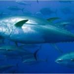 tuna1-880x495