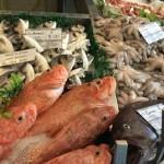 proizvodi_ribarstva_i_akvakulture_430x268