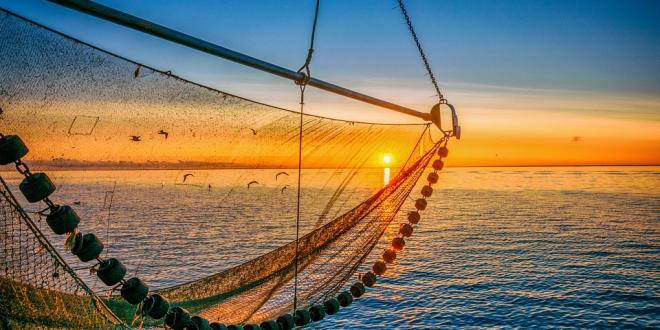 """Objavljen novi Pravilnik o uvjetima, kriterijima i načinu dodjele potpore u okviru mjere IV.4. """"Prerada proizvoda ribarstva i akvakulture"""""""