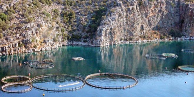 Europska komisija odobrila 30 milijuna kuna za ribarstvo i akvakulturu