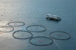 NATJEČAJ  za dodjelu potpore u okviru mjere »Produktivna ulaganja u akvakulturu«