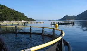 Pravilnik o uvjetima, kriterijima i načinu dodjele potpore u okviru mjere II.7. »Povećanje potencijala akvakulturnih lokaliteta«