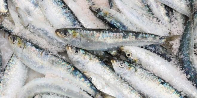 """Savjetovanje s javnošću za Prijedlog pravilnika o uvjetima, kriterijima i načinu dodjele potpore u okviru mjere I.9. """"Privremeni prestanak ribolovnih aktivnosti"""" okružujućim mrežama plivaricama – srdelarama za veljaču 2020. godine"""