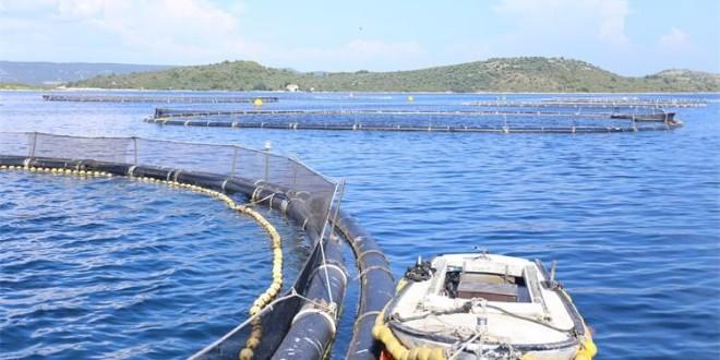 Za razvoj lokaliteta i infrastrukture za akvakulturu na raspolaganju 1,5 milijun eura – Prijedlog pravilnika u e-savjetovanju